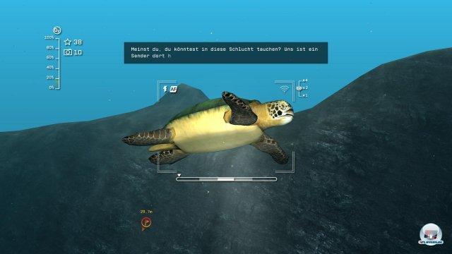 Auch Meeresschildkröten begegnet Scott auf seinen Tauchgängen.