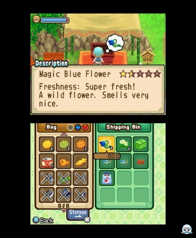 Screenshot - Harvest Moon: The Tale of Two Towns (NDS) 2232072