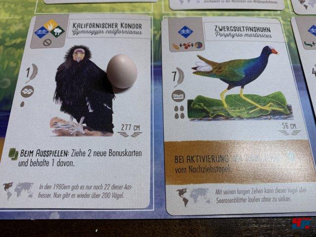 Screenshot - Flügelschlag (Spielkultur) 92588347