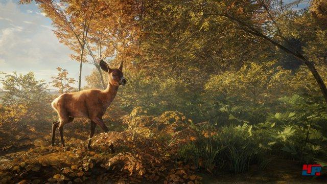 Screenshot - theHunter: Call of the Wild (PC) 92537063
