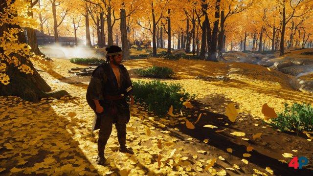 Der goldene Wald - so heißt er auch im Spiel.