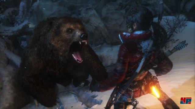 Der Bär zählt zu den gefährlichsten Exemplaren innerhalb der Fauna.