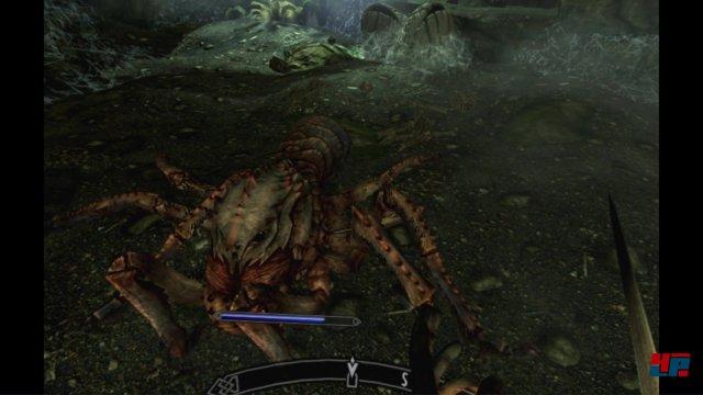Die Spinnen werden in der virtuellen Realität nicht sympathischer.