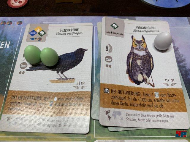 Flügelschlag ist komplett auf Deutsch bei Feuerland Spiele erschienen. Es kostet knapp 50 Euro, gilt als ausverkauft, aber soll ab Juli 2019 wieder erhältlich sein.