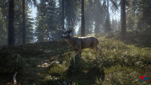 Screenshot - theHunter: Call of the Wild (PS4) 92543002