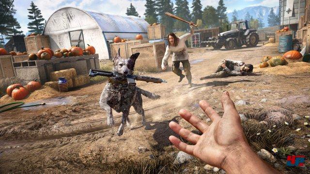 Kleiner Helfer, große Unterstützung: Boomer tötet Gegner und apportiert Waffen.