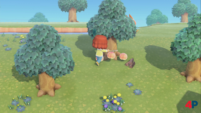 Screenshot - Animal Crossing: New Horizons (Switch) 92607671