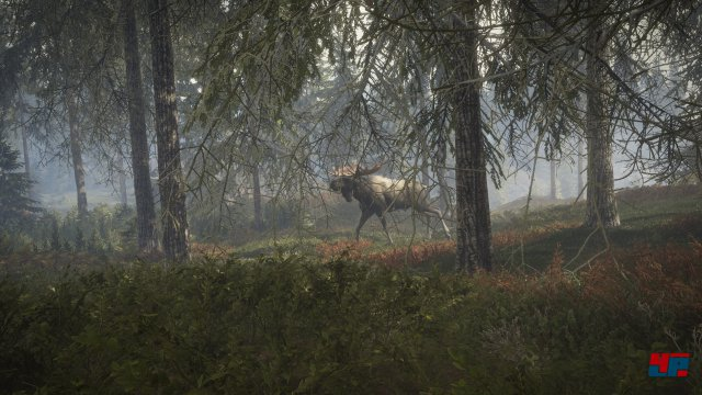 Screenshot - theHunter: Call of the Wild (PS4) 92542999