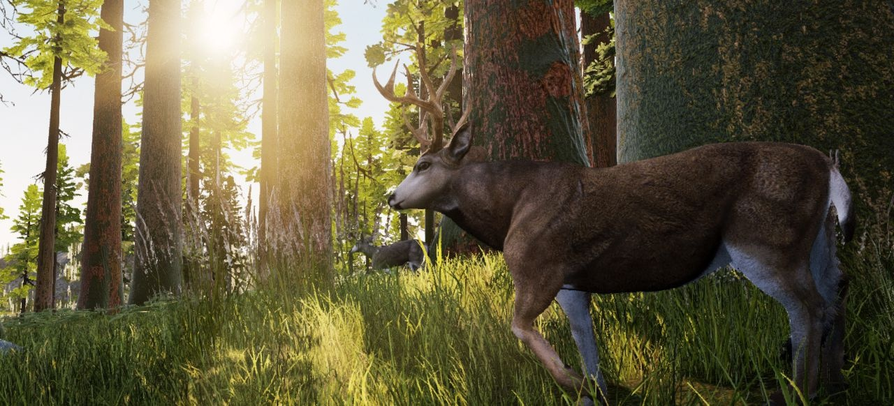 Hunting Simulator (Simulation) von Bigben Interactive