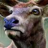 The Hunter 2013 - Deutsche Wälder  für Cheats