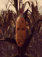 Alle Infos zu Maize (PC,PlayStation4,XboxOne)
