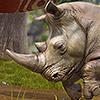 Alle Infos zu Zoo Tycoon (360,PC,XboxOne)